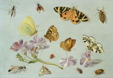 Picture no: 31002266 Butterflies, moths and other insects with a sprig of periwinkle Created by: Kessel, Jan van, the Elder