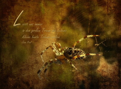 Picture no: 10628478 Spinne Created by: Heike Hultsch