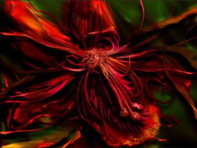 Picture no: 9384190 Flame - Feuerblume Created by: RoxanneLeFay