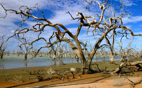 Picture no: 9389784 Menindee Lakes 2 Created by: MisterMister
