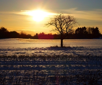 Picture no: 9994019 Sunset-Field Created by: Marion227