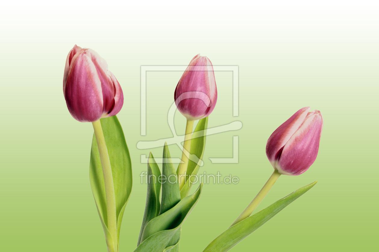 tulpen als leinwand von uwe jahn erh ltlich bei fine a. Black Bedroom Furniture Sets. Home Design Ideas