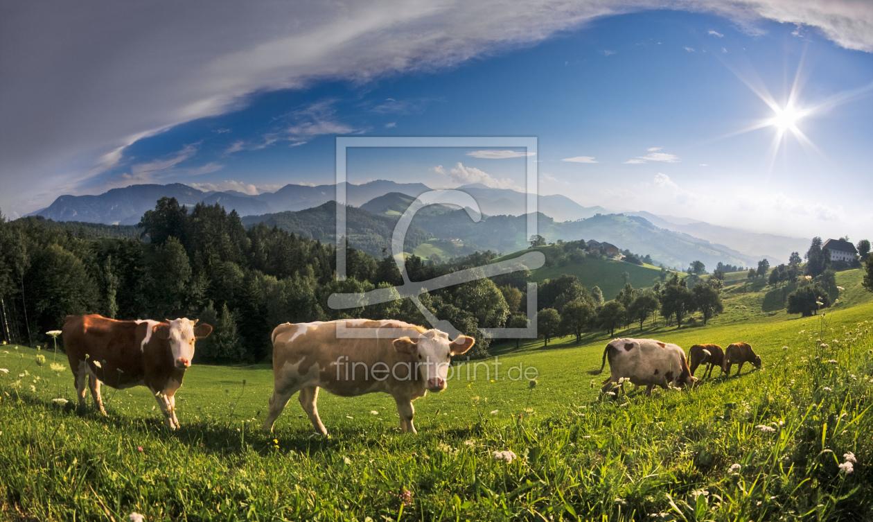 Kuh als leinwand von lukafo erh ltlich bei fine art print - Kuh bilder auf leinwand ...