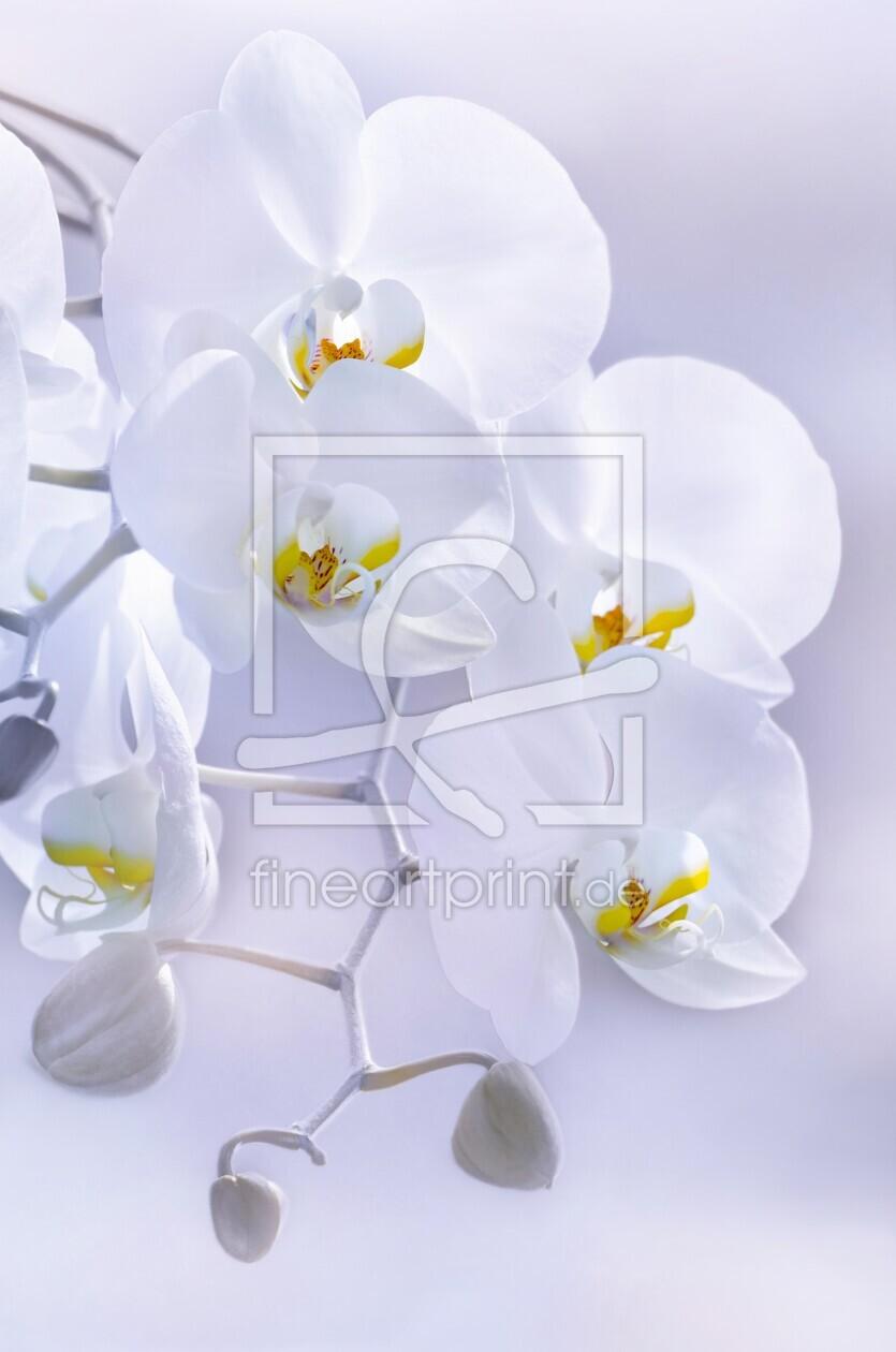 wei e orchidee als leinwand von lightart erh ltlich bei. Black Bedroom Furniture Sets. Home Design Ideas