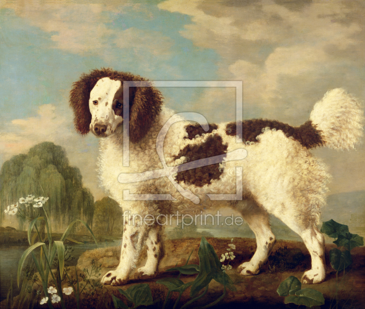Bild-Nr.: 31001430 Brown and White Norfolk or Water Spaniel, 1778 erstellt von Stubbs, George