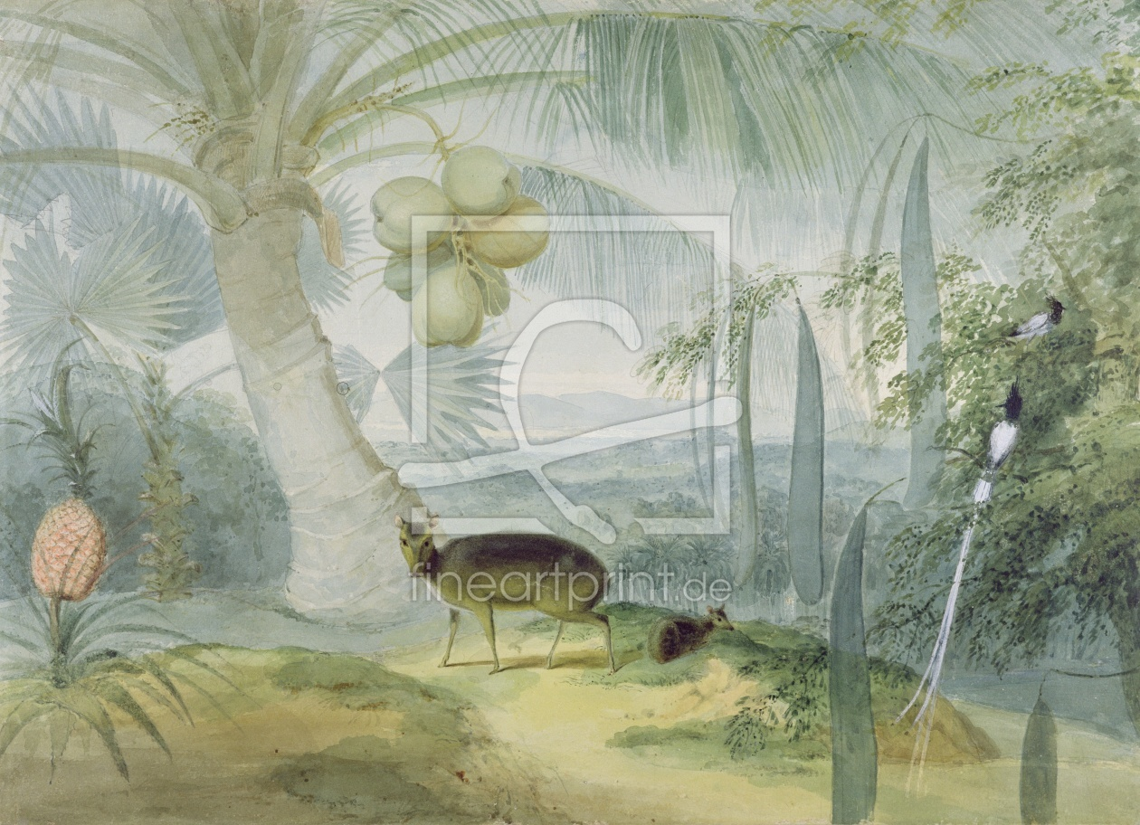 Bild-Nr.: 31002154 A Landscape in Ceylon, with Barking Deer and Fawn and a pair of Paradise Fly-Cat erstellt von Daniell, Samuel