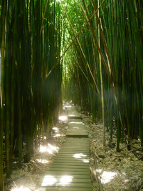 Bamboo Forest/9542718
