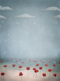 Poppies in the snow/9597442