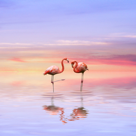 Flamingos in love/9601328