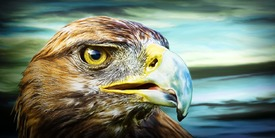 Eagle (DigiPaint)/10043433