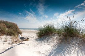 Sylt - On the beach/11158036