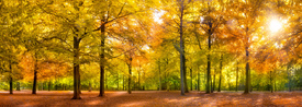 Wald Panorama im Herbst/11808502