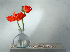 still life with poppy Mohn/11970820