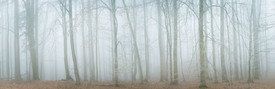 Wald im Frost Panorama /12169427