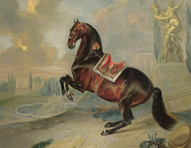 Bild-Nr: 31001723 The dark bay horse 'Valido' performing a Levade movement Erstellt von: Hamilton, Johann Georg