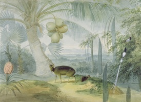 Bild-Nr: 31002154 A Landscape in Ceylon, with Barking Deer and Fawn and a pair of Paradise Fly-Cat Erstellt von: Daniell, Samuel