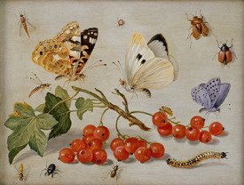 Bild-Nr: 31002264 A still life with sprig of Redcurrants, butterflies, beetles, caterpillar and in Erstellt von: Kessel, Jan van, the Elder