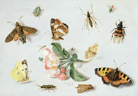 Bild-Nr: 31002265 Butterflies, moths and other insects with a sprig of apple blossom Erstellt von: Kessel, Jan van, the Elder