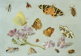 Bild-Nr: 31002266 Butterflies, moths and other insects with a sprig of periwinkle Erstellt von: Kessel, Jan van, the Elder