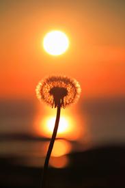 Pusti trifft Sonne/9869394