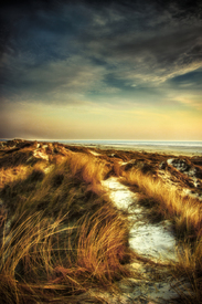 North sea dunes/10505507