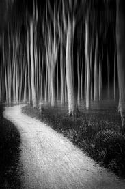 Der Weg durch den Geisterwald/11549110
