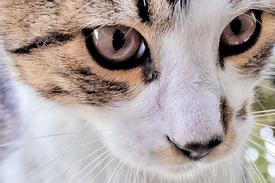 Katze/11579270