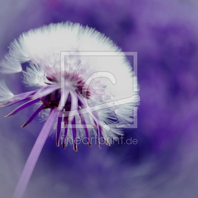 pusteblume lila als leinwand von christine b ssler erh l. Black Bedroom Furniture Sets. Home Design Ideas