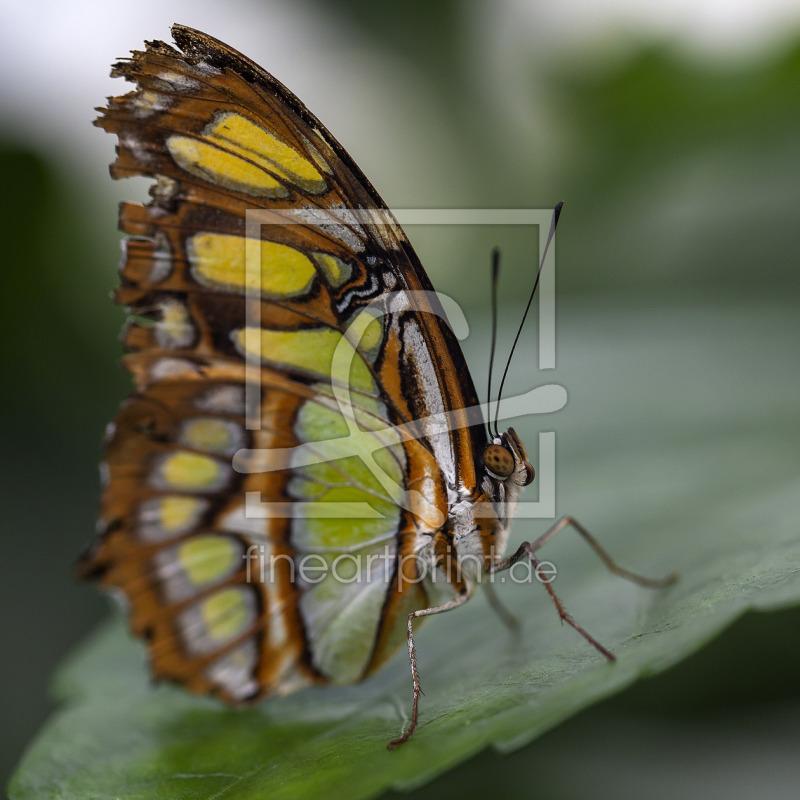 butterfly als glas schneidebrett von klaus kehrls erh ltli. Black Bedroom Furniture Sets. Home Design Ideas