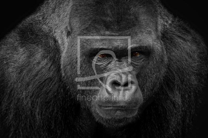 gorilla silberr cken als leinwand von ina penning erh. Black Bedroom Furniture Sets. Home Design Ideas