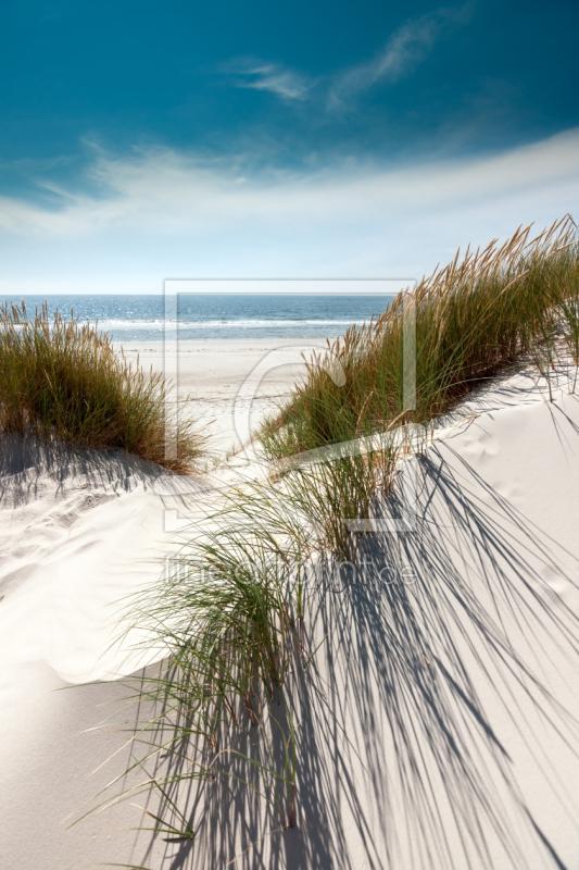 volle pracht d nen mit strandhafer als leinwand von. Black Bedroom Furniture Sets. Home Design Ideas