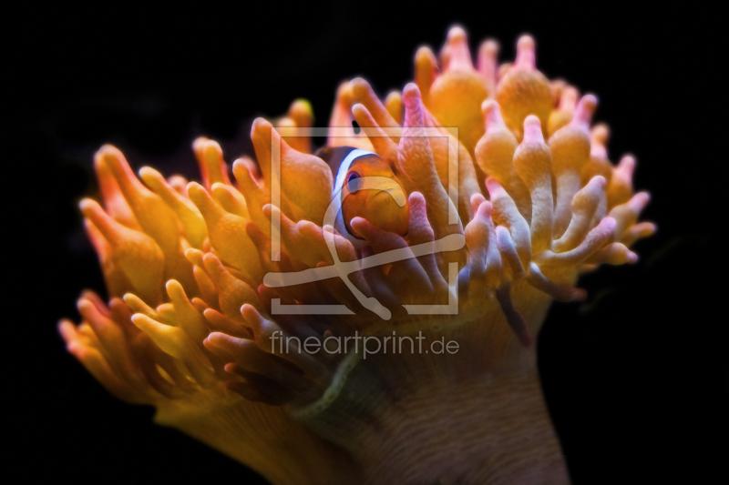 clownfisch in anemone als leinwand von thomas herz. Black Bedroom Furniture Sets. Home Design Ideas
