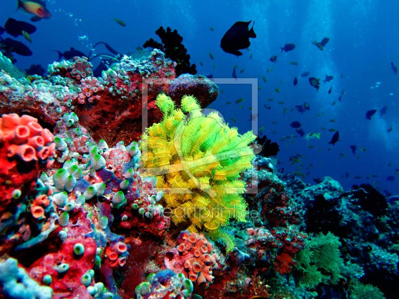 Bunte Unterwasserwelt Als Leinwand Von Malediven Bild