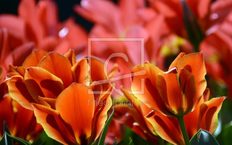tulpen leuchten als glas schneidebrett von gugigei e. Black Bedroom Furniture Sets. Home Design Ideas