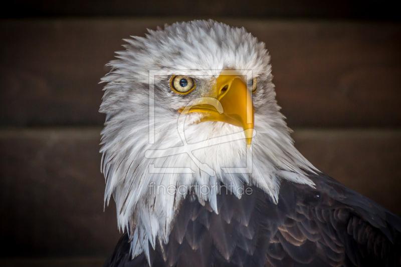Adler als Teppich von Pixelhelm erhältlich bei Fine Art Print
