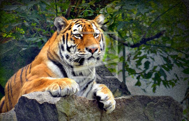 Der Tiger als Leinwanddruck 10604950 | Fine Art Print