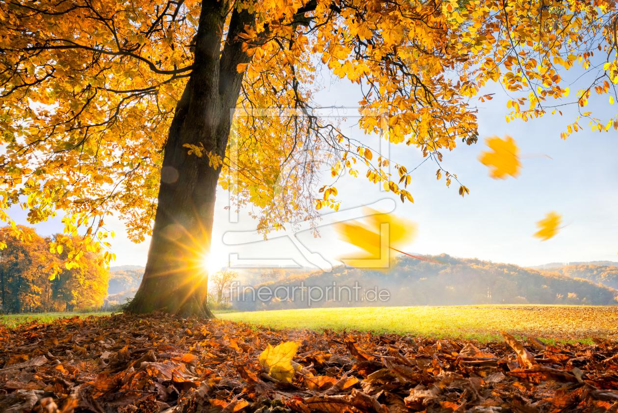 Goldener Herbst as a wallpaper print 11931703 | Fine